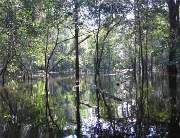 Uacari Licht und Schatten im Wald