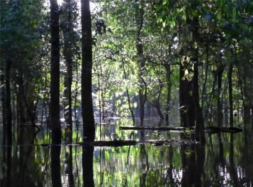Uacari Spiel aus Licht und Schatten
