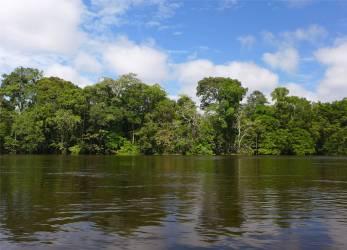 Uacari wunderschöner Wald