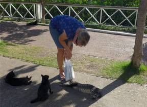 Jacare mir gefallen die Katzen besser als die Krokos