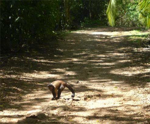 Ile Salut Affen ohne Angst
