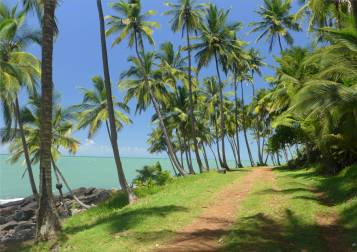 Ile Salut Palmen wiegen sich im Wind