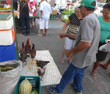 Joao Pessoa Hühnerverkauf auf dem Markt