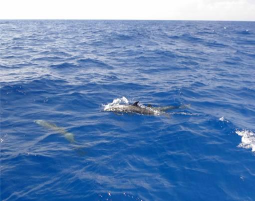 Unterwegs nach FG Delfine 2