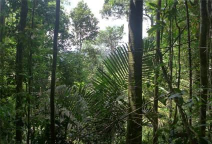 FG Affenberg Gruppenbild mit Palmen