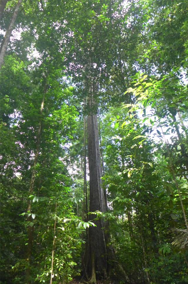 FG Affenberg Regenwaldspaziergang