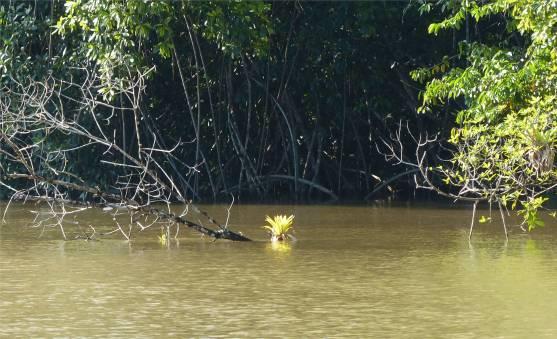FG Criques höher darf die Flut nicht steigen sonst gibt mehr als nasse füße