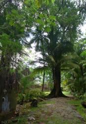 FG Ile Joseph auf diesem Weg wächst ein Baum