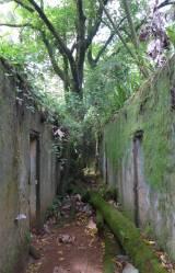 FG Ile Joseph die Bäume erobern die Ruinen