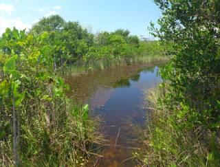 FG Sumpflandschaft