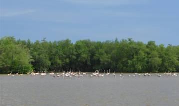 Suriname Bigi Pan rosa Vögel