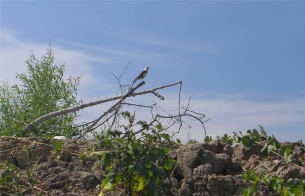 Suriname Bigi Pan wir werden beobachtet
