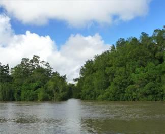 Suriname dieser Creek ist zu eng für uns