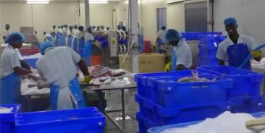 Suriname in der Fischfabrik