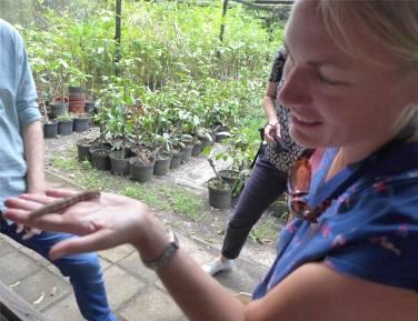 Suriname Inga mit der Raupe Nimmersatt