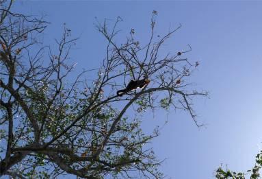 Suriname Peperpot die Blüten scheinen zu schmecken
