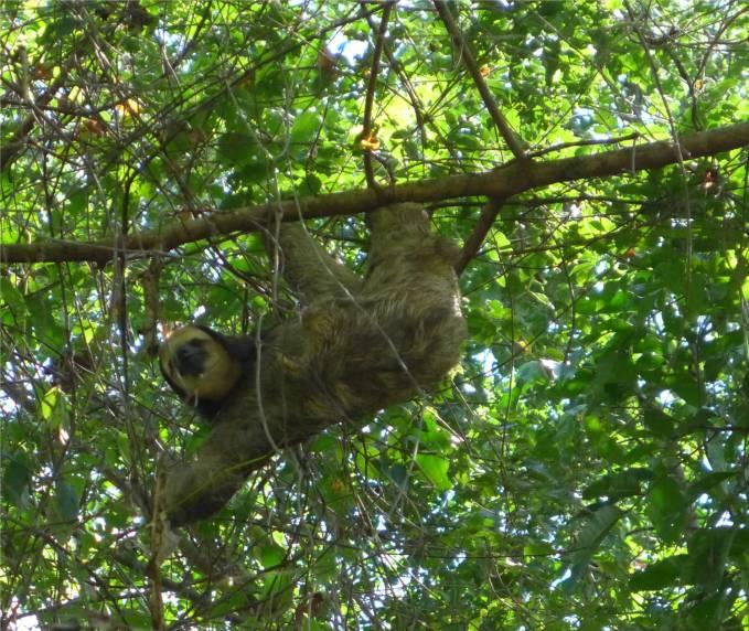 Suriname Peperpot einfach mal abhängen