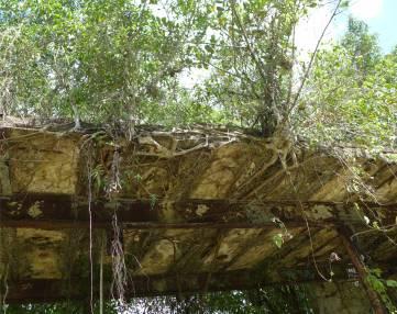 Suriname Plantagentag die Natur erobert