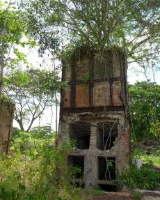 Suriname Plantagentag dieser Baum hat sich einen besonders scgönen Platz gesucht