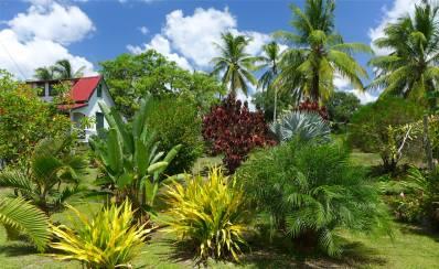Suriname Plantagentag schöner Garten in Fredriksdorp