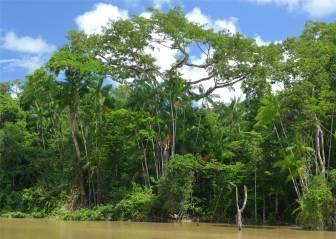 Suriname beruhigendes grün
