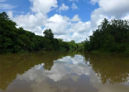 Suriname Fluss im Spiegel