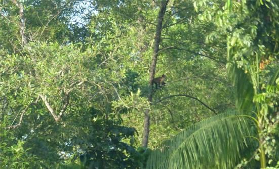 Suriname Perica Affenbesuch 1