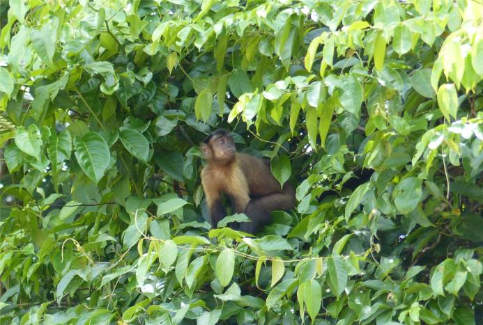 Suriname Perica Affenbesuch 2
