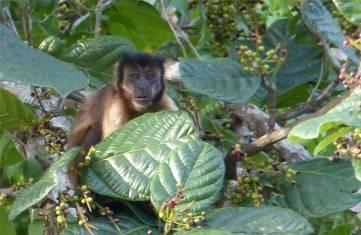 Suriname Perica Affenbesuch 4
