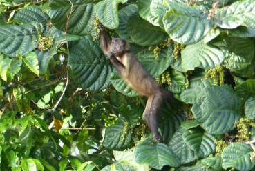 Suriname Perica Affenbesuch 7