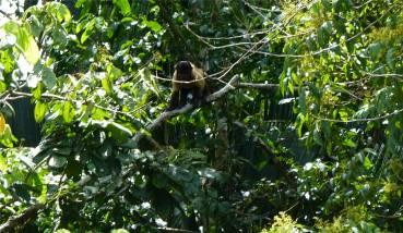 Suriname Perica Affenbesuch 8