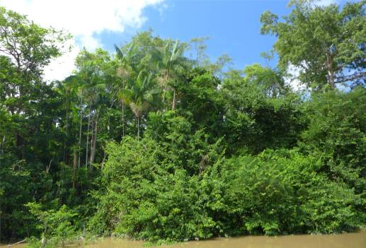 Suriname Regenwaldfototapete