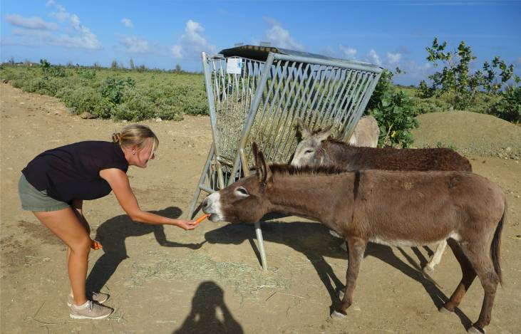 Bonaire Esel und Inga