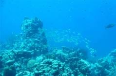 Bonaire Fische
