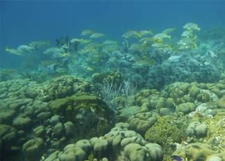 Bonaire Fischsuppe