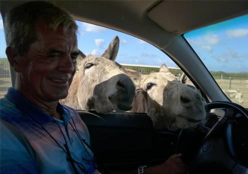 Bonaire Nobbi und die Esel