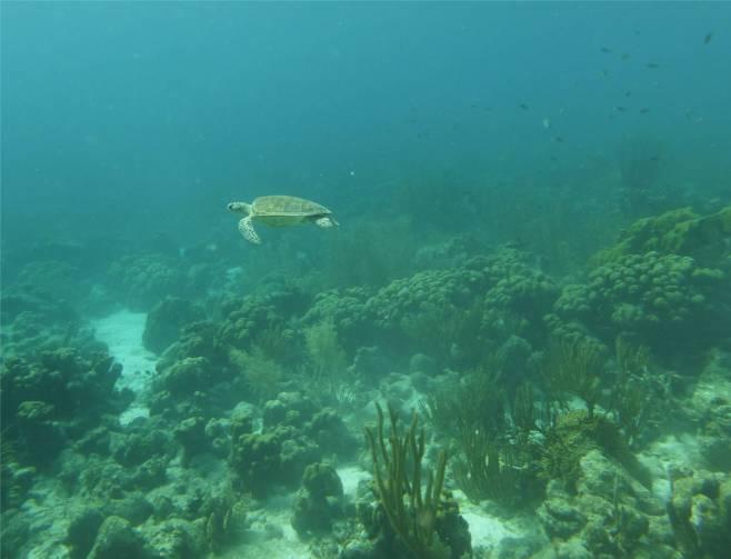 Bonaire Schildkrötenbegegnung