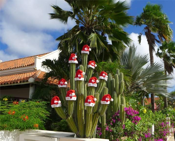 Bonaire Weihnachtskaktus