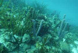 Bonaire reichlich Schwämme