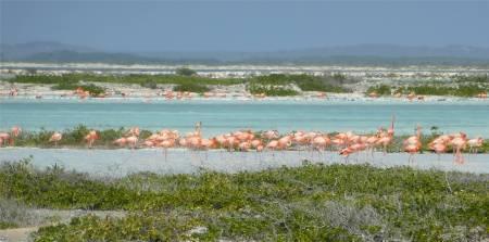 Bonaire rosa und türkis