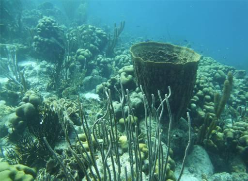 Bonaire schönes Riff