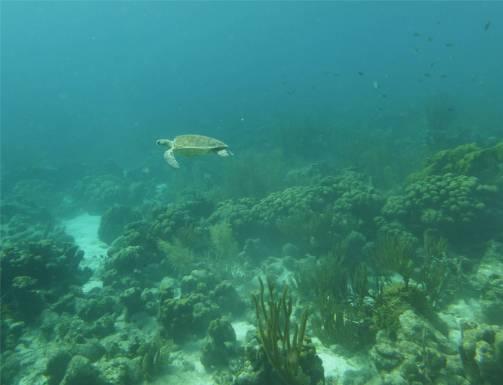 Tauchen auf Bonaire