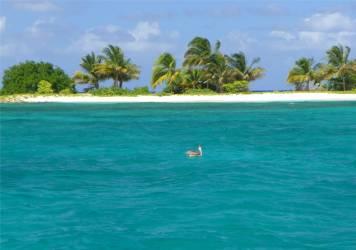 Carriacou Pelikan vor Sandy Island