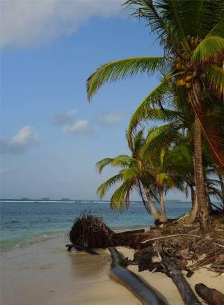 san blas aussicht mit palmen