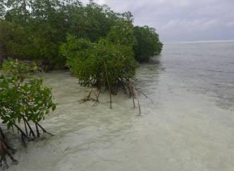 san blas holandes glasklares wasser zw den mangroven