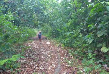 Panama SBM Inga im Wald