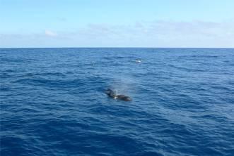 Pazifik Passage 13