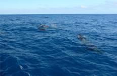 Pazifik Passage 15