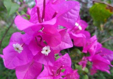 fp-hiva-oa-bluetenpracht3891342719274826061..jpg