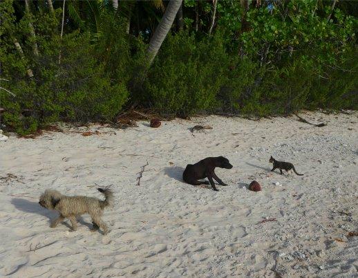 fp makemo punaruku die familie hat hunde und die katze mitgebracht8218089661234474868..jpg